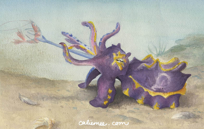 Flamboyant Cuttlefish(2011)