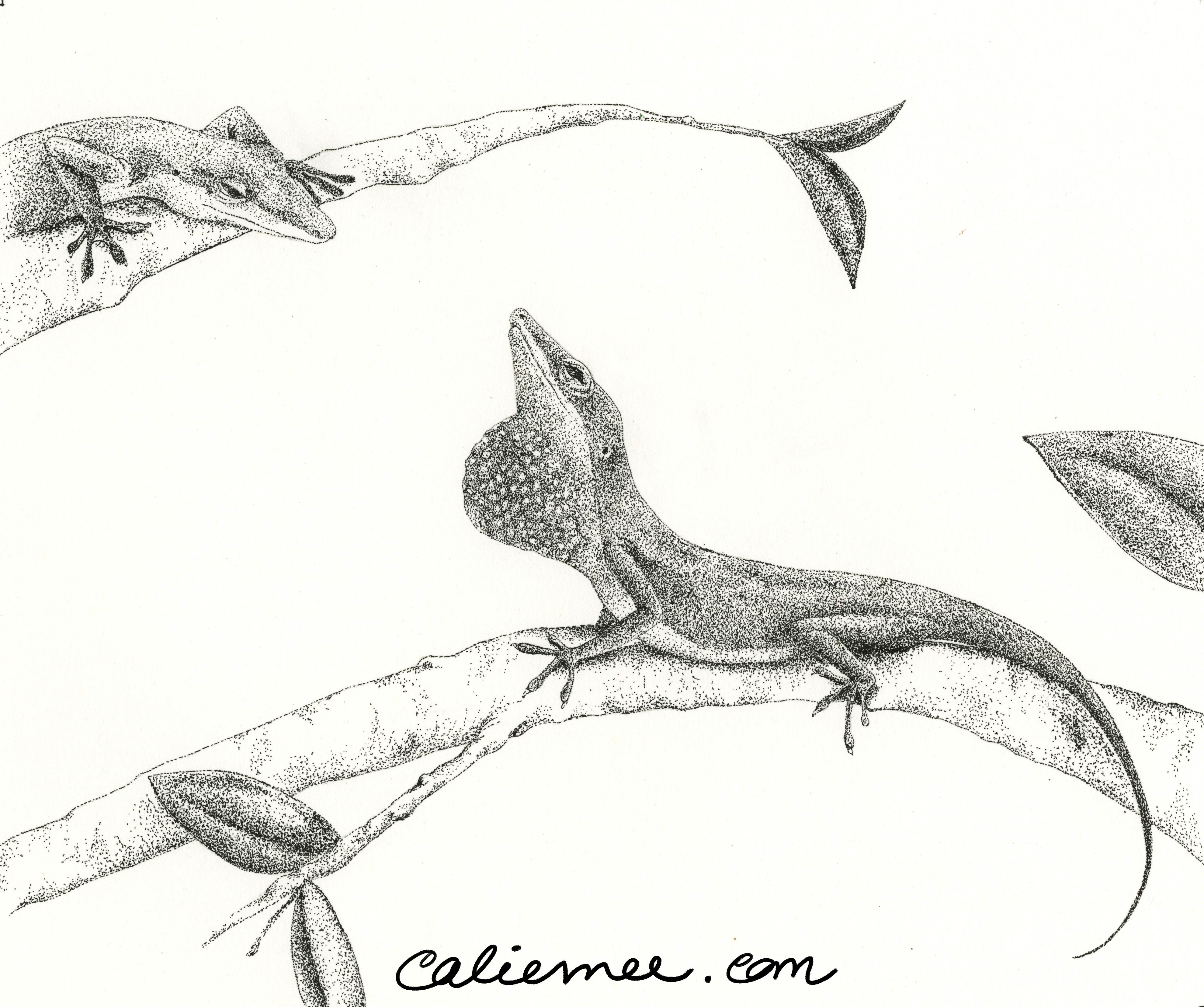 Green Anole Study (2011)